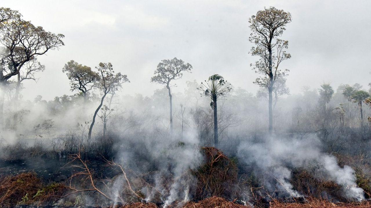 Les fumées recouvrent le ciel du parc Otuquis en Bolivie. Si les feux dans la partie brésilienne de l'Amazonie focalisent l'attention médiatique, les incendies font aussi rage dans la partie bolivienne, où ils ont ravagé 9.500km2.