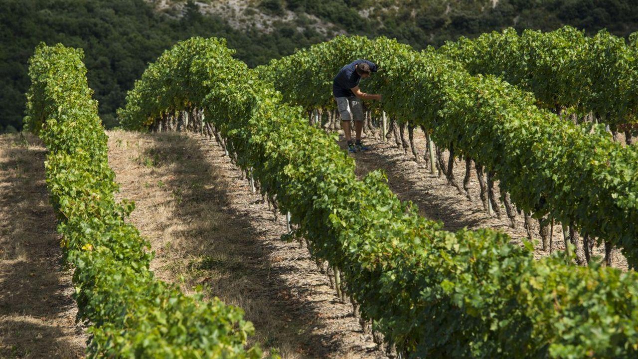 Les 440 sociétaires possèdent collectivement 60 hectares de vignes.
