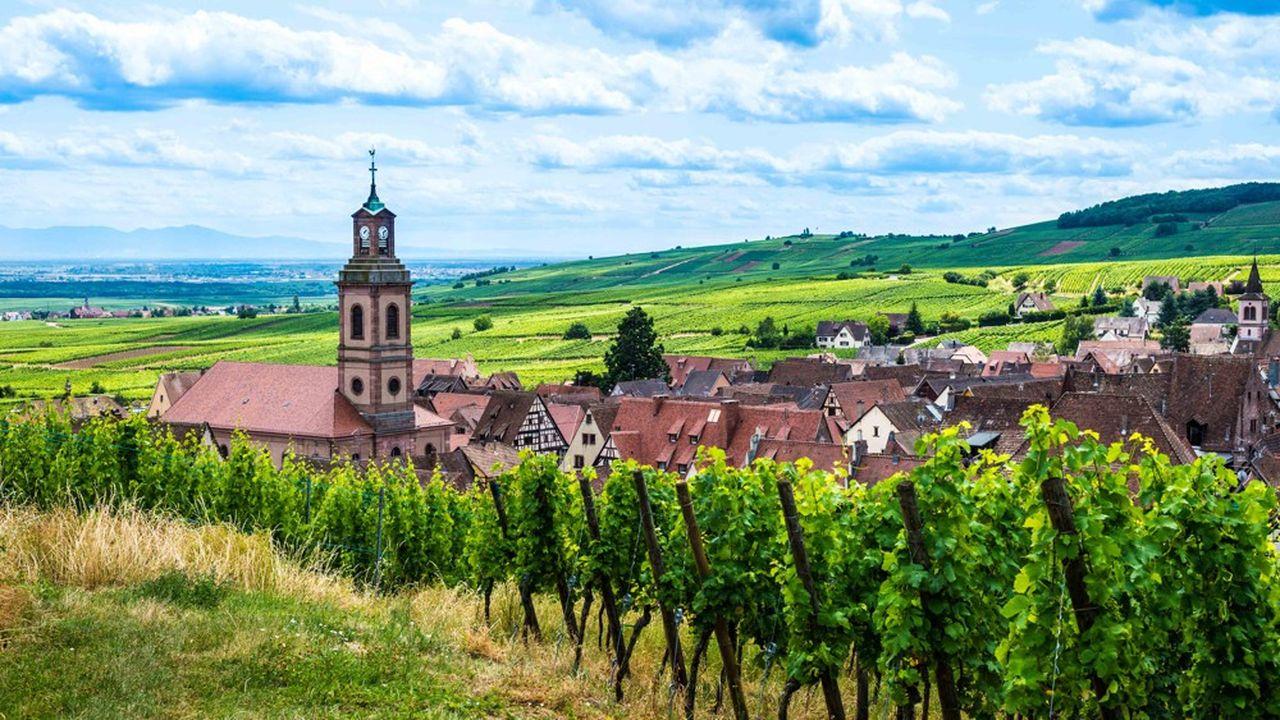 Le vignoble a besoin de 19.000 paires de bras pendant les vendanges, et ce pendant une période longue d'un mois et demi.