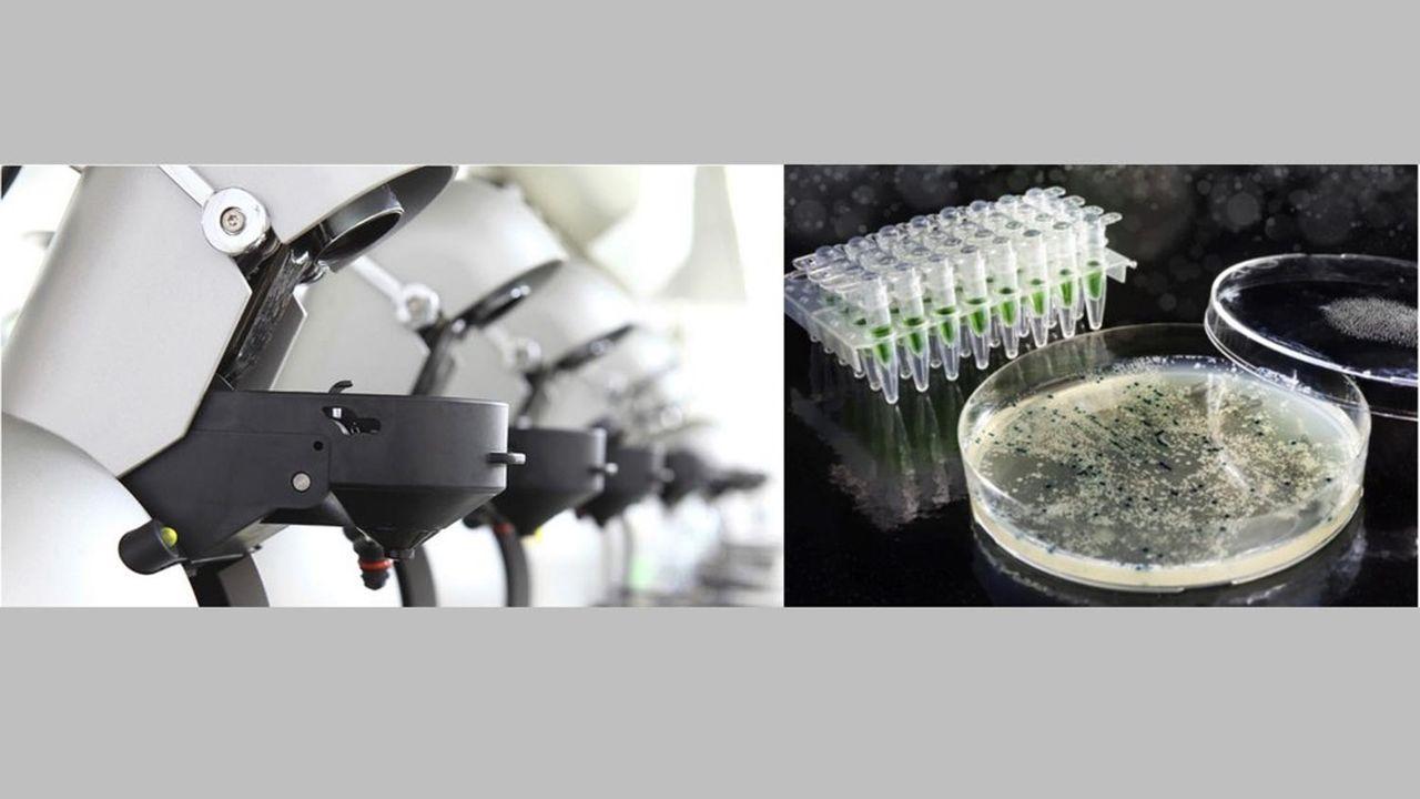 Le kit de diagnostic créé par Microbs permet d'analyser un échantillon entre quelques minutes et une heure maximum.