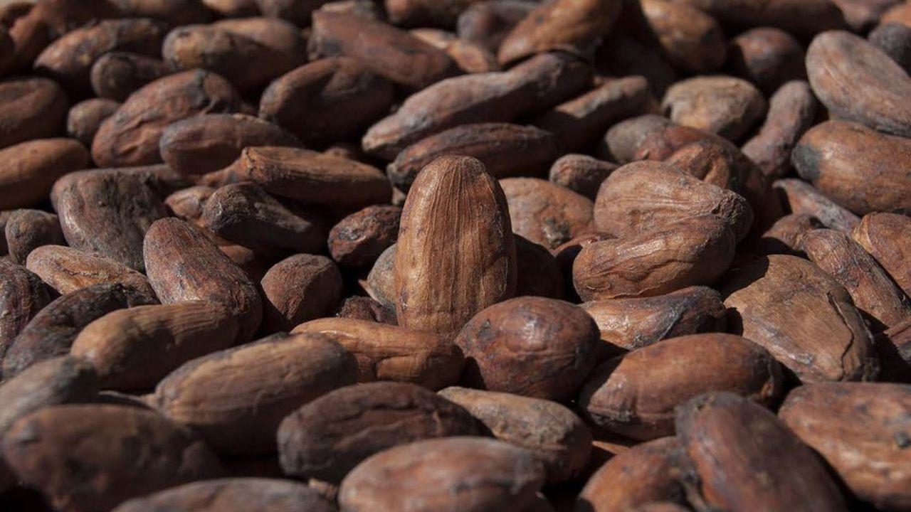 Le cacao bio du fabricant vient du Pérou, de l'Equateur, de la République dominicaine et de Sao Tomé.