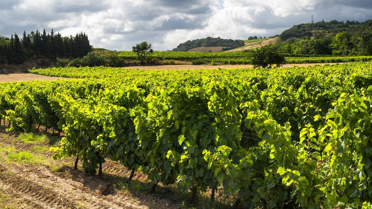 Vinadeis est le premier groupe coopératif viticole français, avec 1.500 actionnaires vignerons.