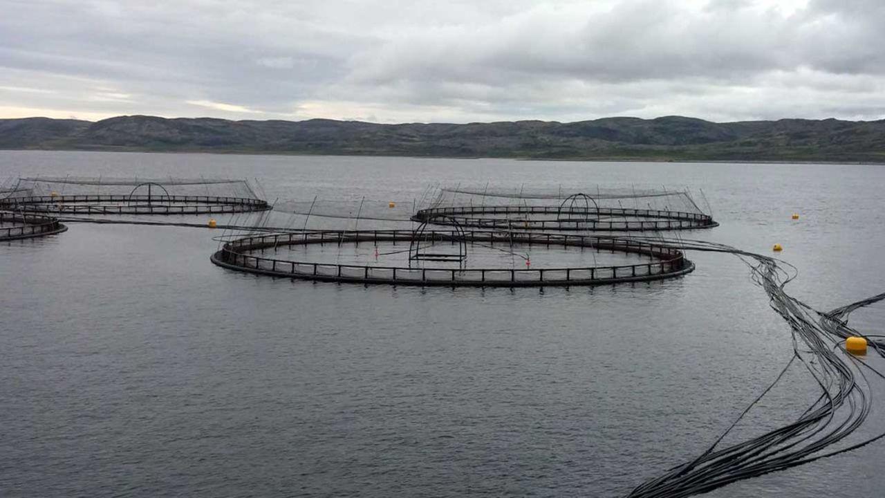 Le patron de Russian Aquaculture veut transposer dans les fjords de la mer de Barents les recettes du saumon norvégien.