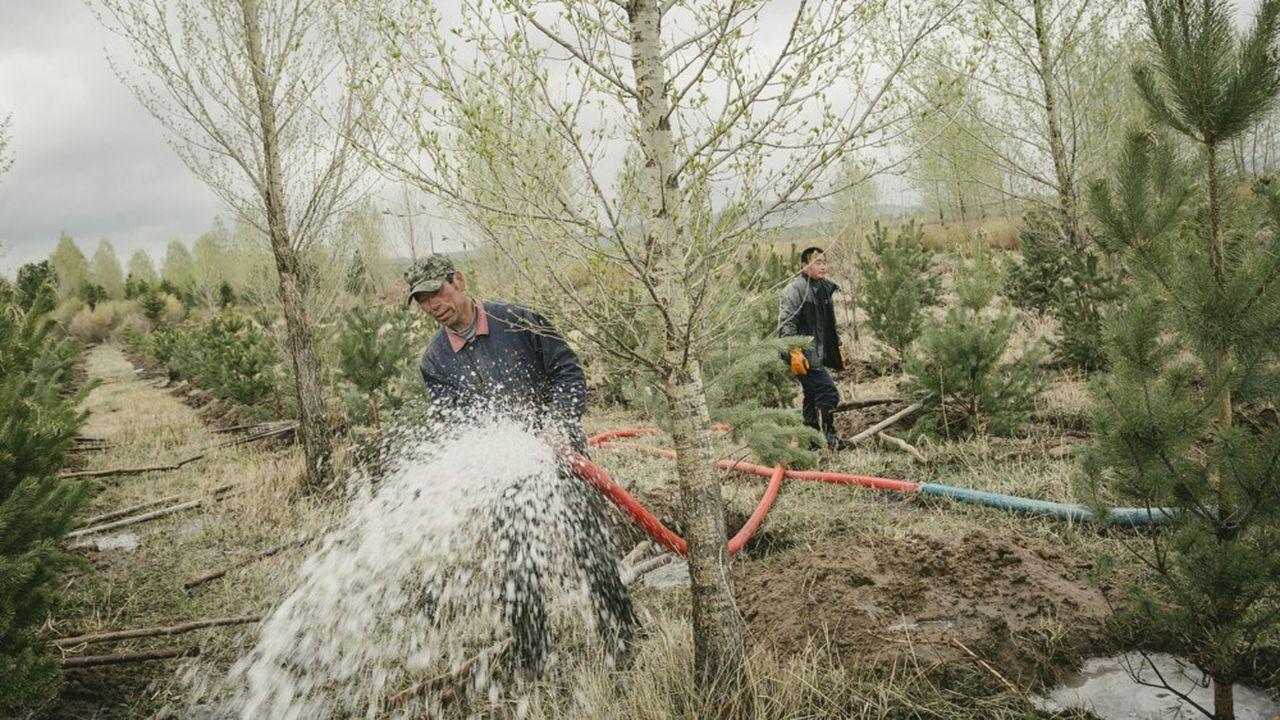 Au nord du Pays, Pékin a fait planter des milliards d'arbres pour stabiliser l'avancée du désert.