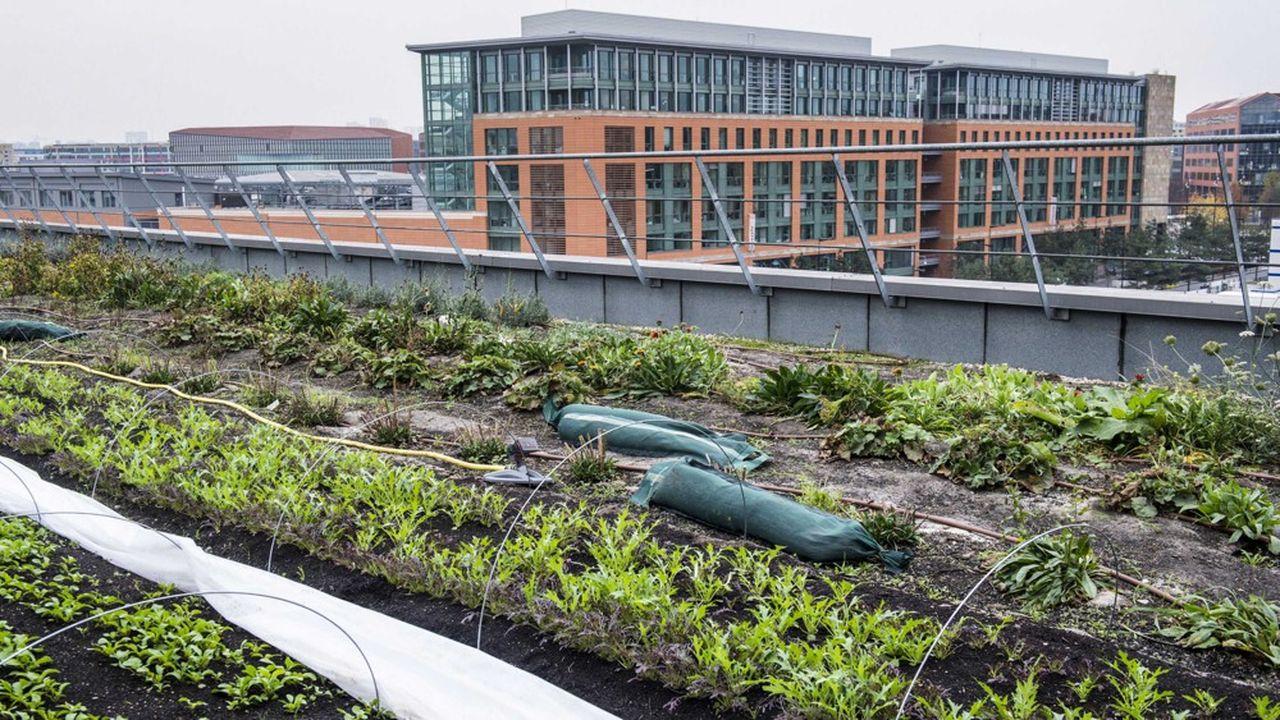 Projet de maraîchage urbain écologique.