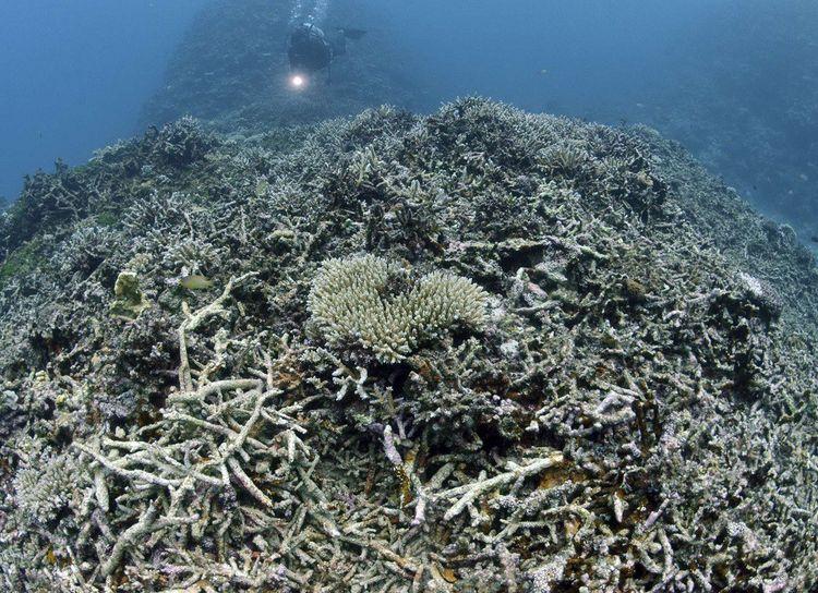 Des coraux blanchis au large du Japon, en avril2017.