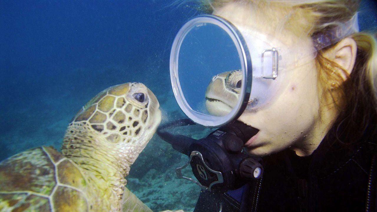 Les tortues font partie des espèces dépendantes de la Grande barrière de corail, qui abrite une grande variété de plantes et animaux aquatiques.