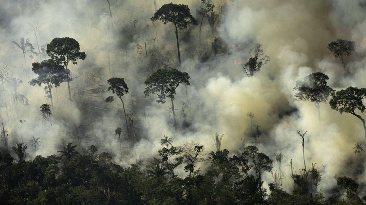 Pour aider à lutter contre les feux en Amazonie et préserver les forêts tropicales, 500millions de dollars vont être mobilisés par des bailleurs de fonds internationaux.