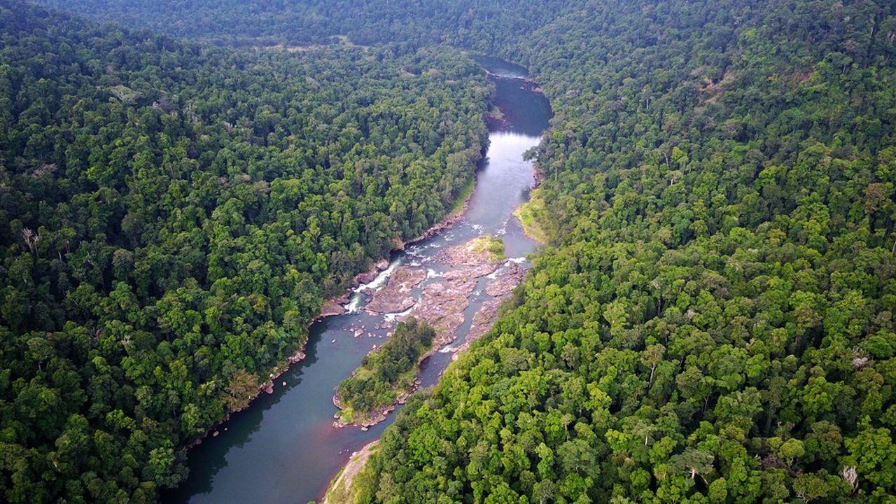 La forêt amazoniennes'étend sur cinq millions de kilomètres carrés, au Brésil majoritairement.