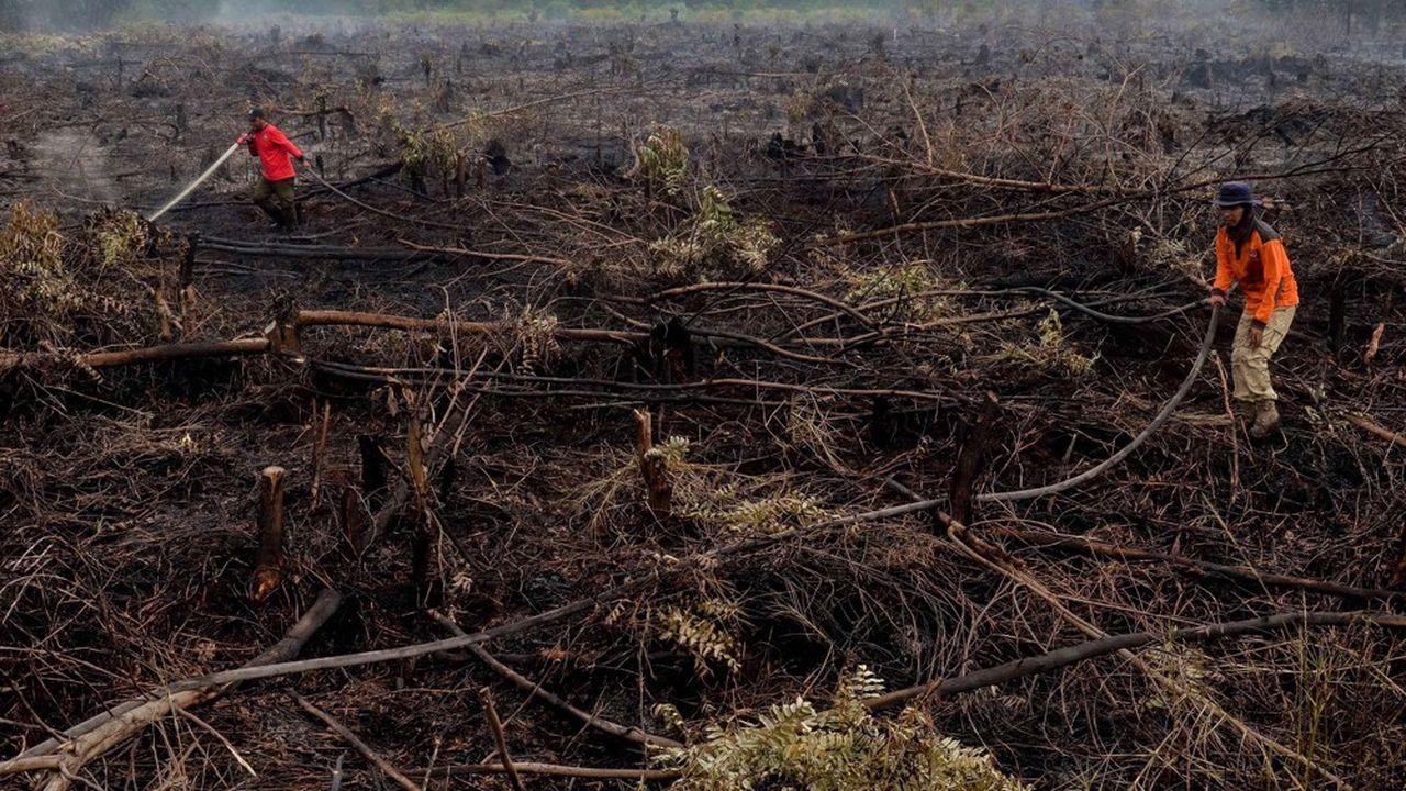 Des pompiers luttent contre des incendies à Pekanbaru sur l'île de Sumatra où 78 départs de feu ont été constatés le 1erfévrier 2018.