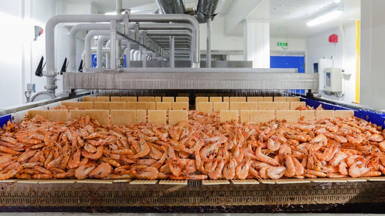 Crusta C implante une usine de crevettes à Arras
