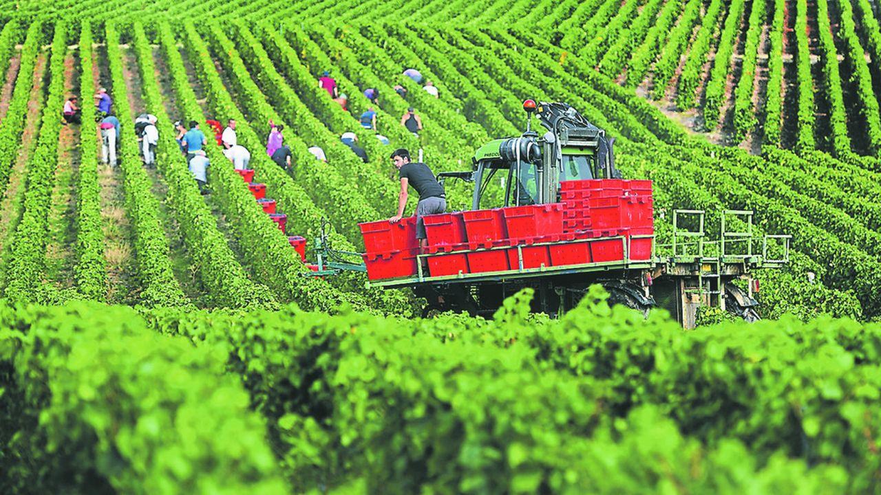 La vendange 2019 a été exceptionnelle en Champagne malgré la perte de 10% des raisins grillés par des épisodes de canicule extrême et un pic jamais vu de température à 43 degrés le 25juillet.