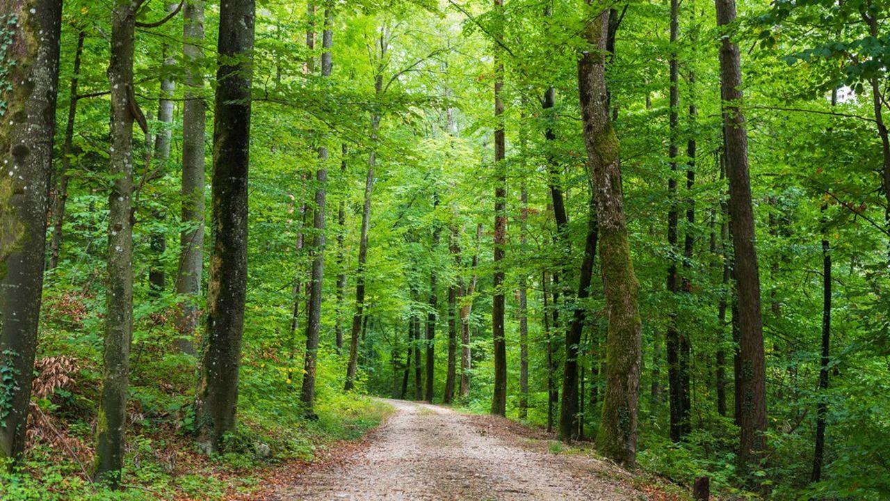 La forêt fera 1.350 hectares.