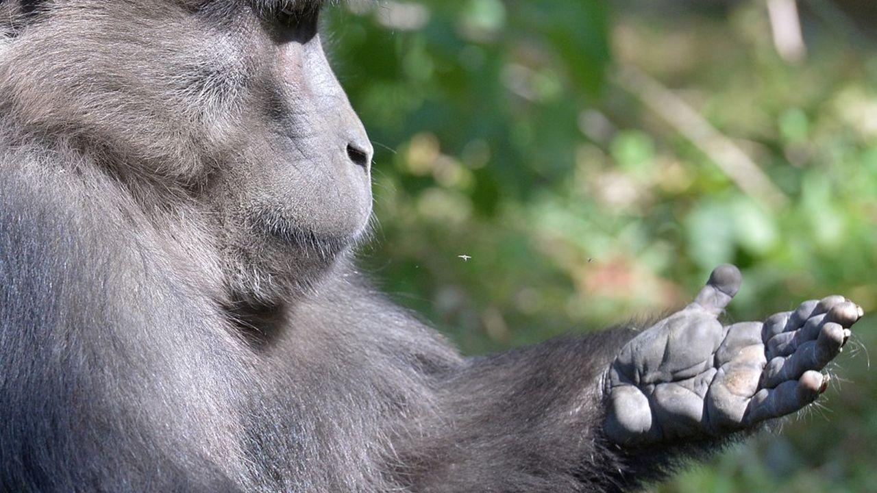 Le collectif Fight for Monkeys organise cette manifestation chaque année depuis 2015.