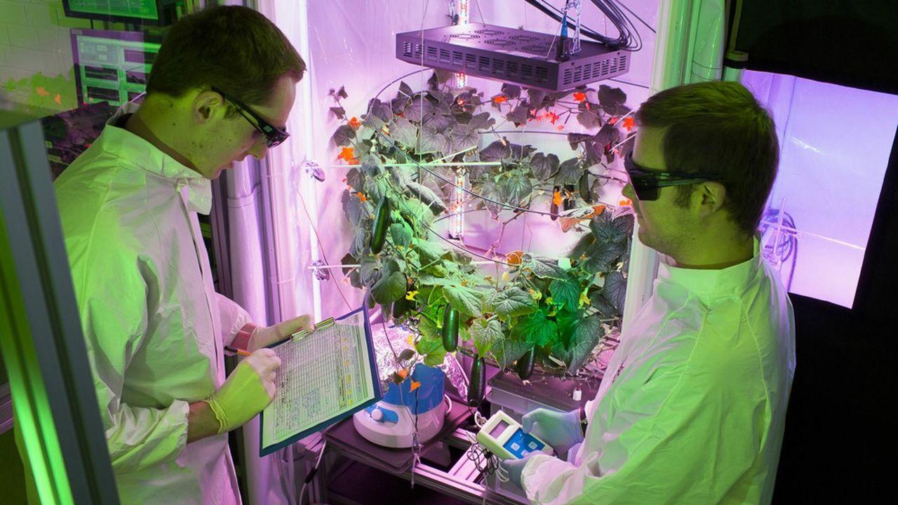 Des chercheurs de l'Agence spatiale allemande (DLR) travaillant sur leur projet Eden ISS mené en Antarctique.