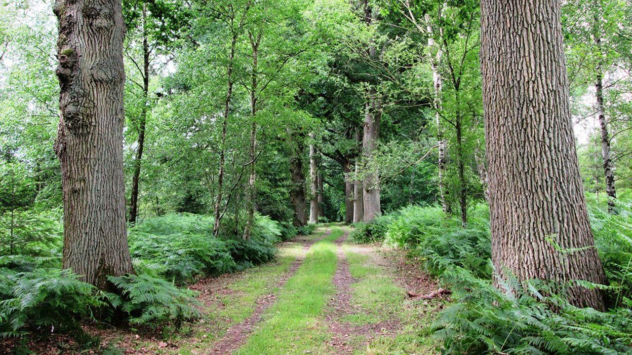 Les 175 hectares, sans doute les plus beaux, étaient une réserve de chasse fermée, propriété d'un particulier.