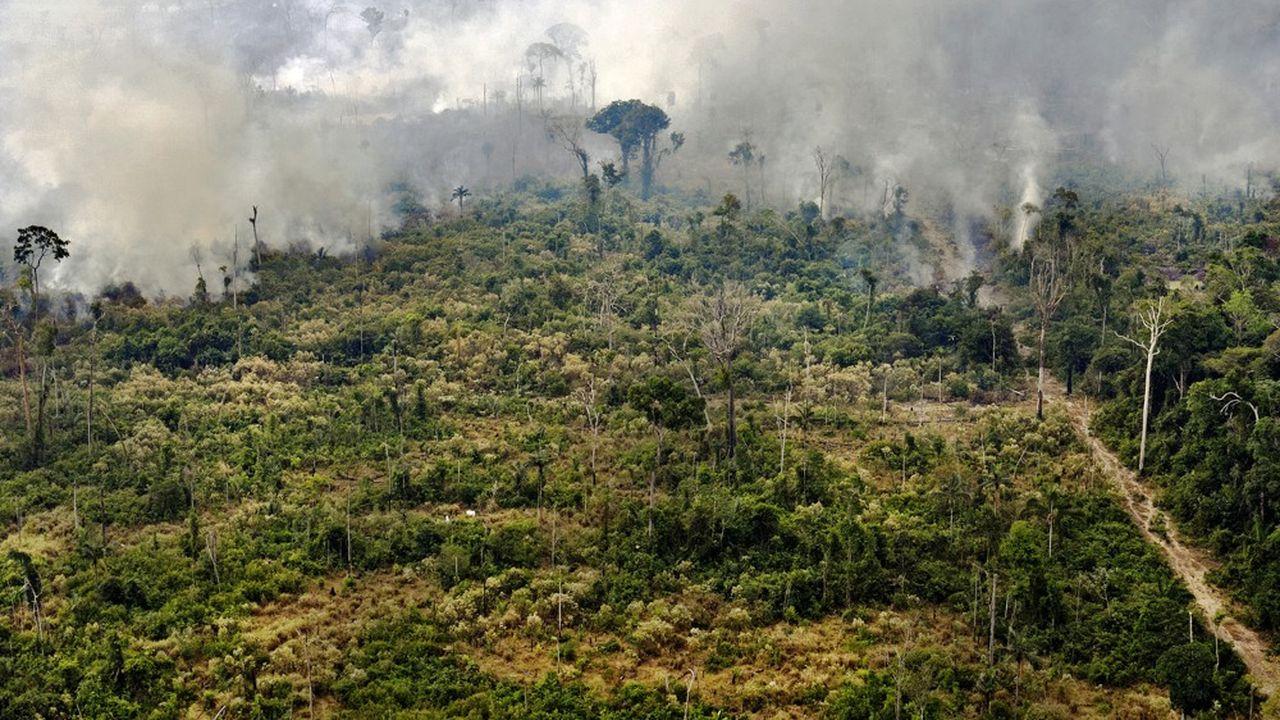 Une baisse du nombre d'arbres dans la forêt amazonienne entraînerait une baisse des pluies et irrémédiablement, une situation de sécheresse.