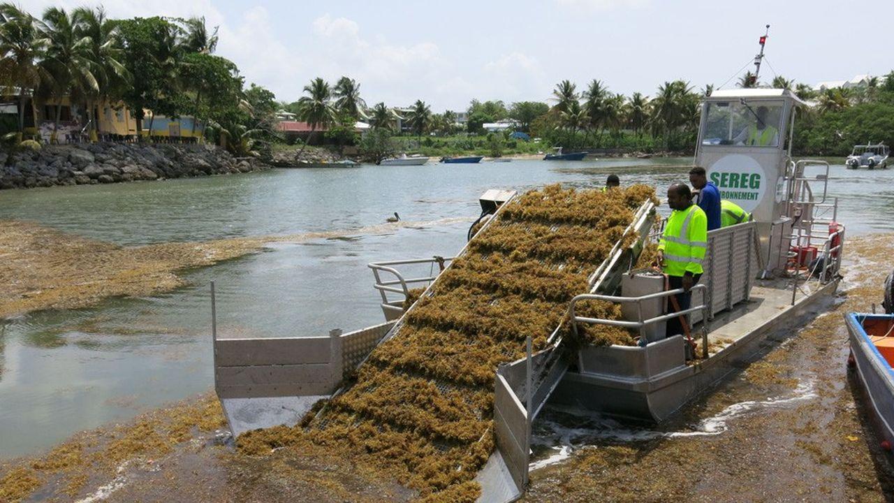 Depuis plusieurs années, des bateaux équipés de tapis roulant tentent de ramasser les algues avant qu'elles s'échouent sur le littoral.