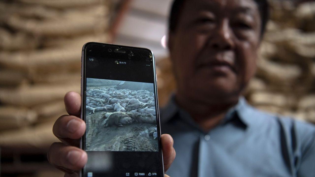 Sun Dawu montre une photo de ses cochons, abattus pour cause de fièvre porcine.