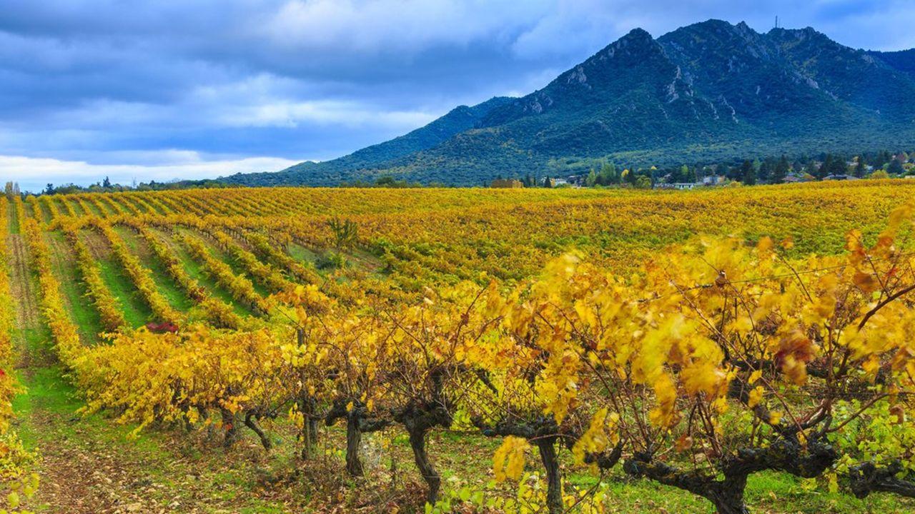 Selon les estimations de l'OIV, l'Espagne, troisième producteur mondial de vin, devrait voir sa récolte plonger de 24% en 2019.
