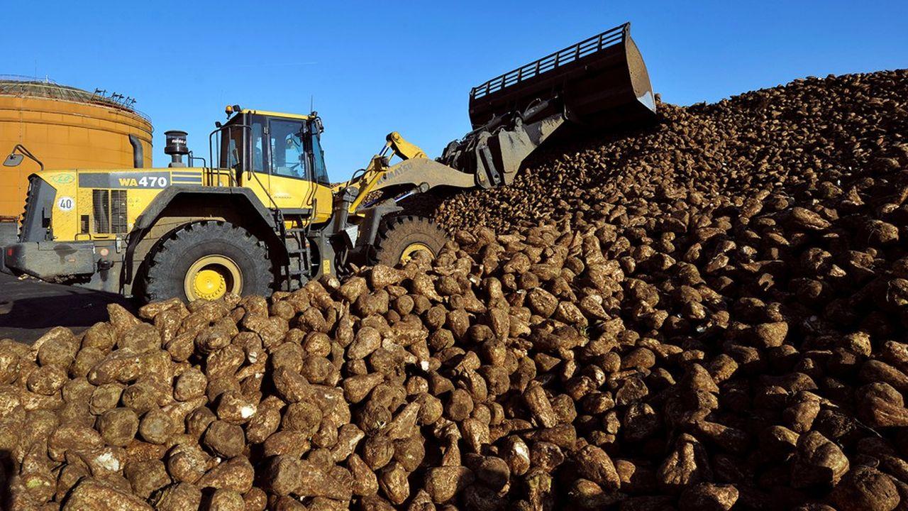 A peine finie la crise mondiale du sucre, le groupe Tereos repart de l'avant. En quelques mois la planète du sucre est passée «d'une situation excédentaire à une situation de déficit», explique Alexis Duval, président du directoire.