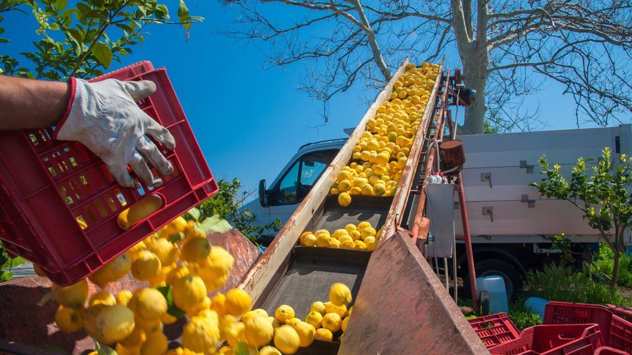 L'Italie figure parmi les bons élèves de la classe européenne en matière d'agriculture bio.