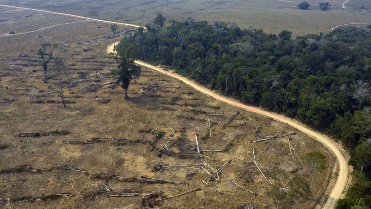 La forêt amazonienne au Brésil, en août2019