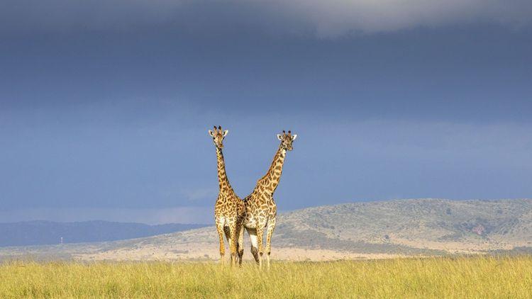 D'un demi-million à un million d'espèces risquent l'extinction.