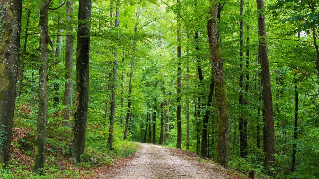 Une nouvelle forêt de 1.350 hectares doit être créée.