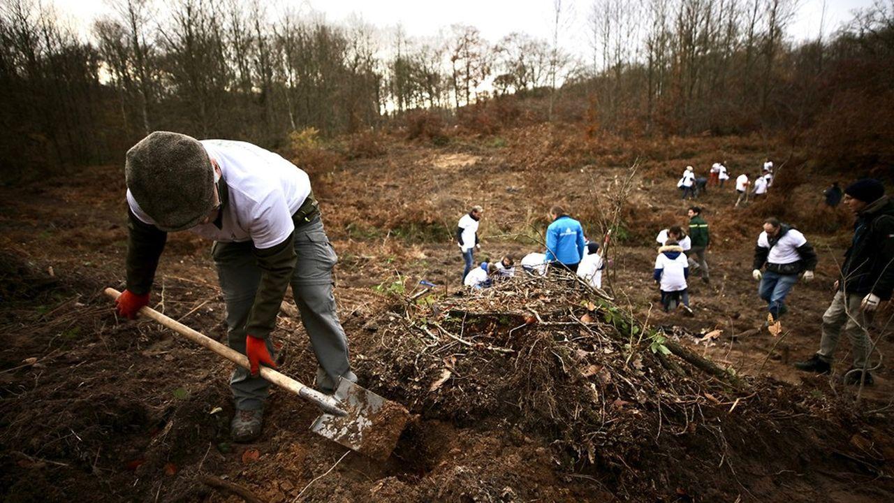 Reforest'Action : Plantation de 3 000 arbres dans la forêt de Sainte-Apolline à Plaisir