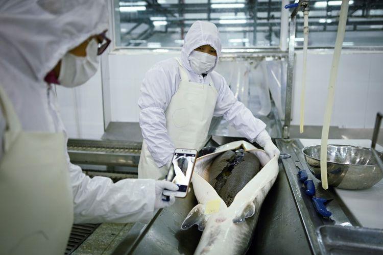 Dans l'usine de Kaluga Queen à Quzhou. Un seul béluga peut contenir la valeur d'une Ferrari.