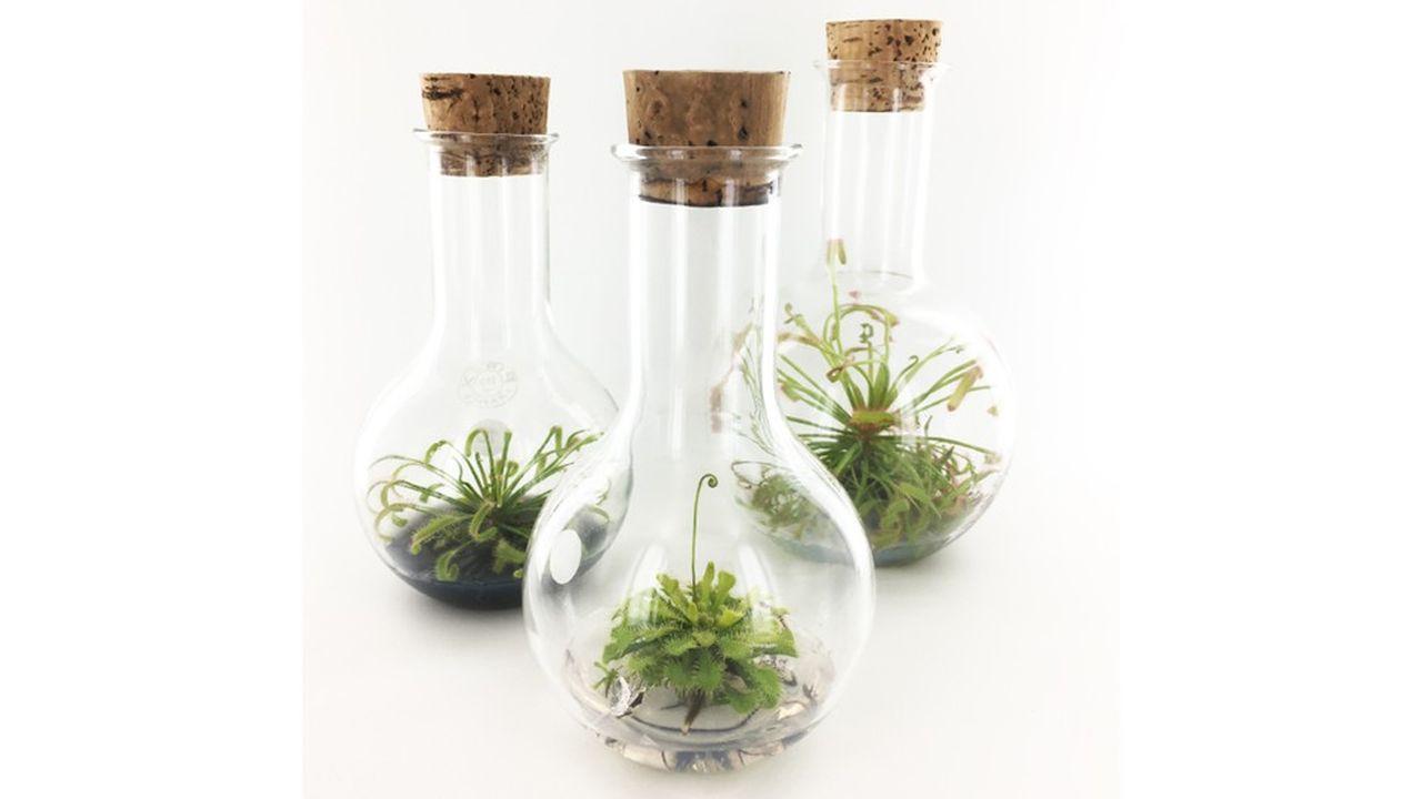 Les plantes se développent dans un récipient décoratif qui les protège.