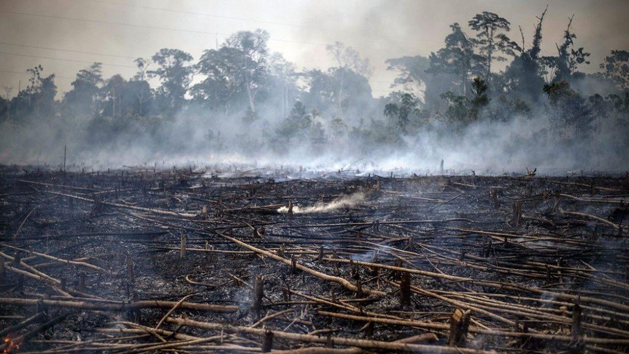 Les incendies en Amazonie ont ravivé les inquiétudes autour de l'avenir de ce poumon de la planète.