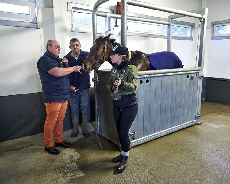 Le vétérinaire Gilles Baratoux 'scope' un trotteur: grâce à cette endoscopie des voies respiratoires à partir de la narine, le propriétaire espère comprendre les raisons des piètres performances de son cheval.
