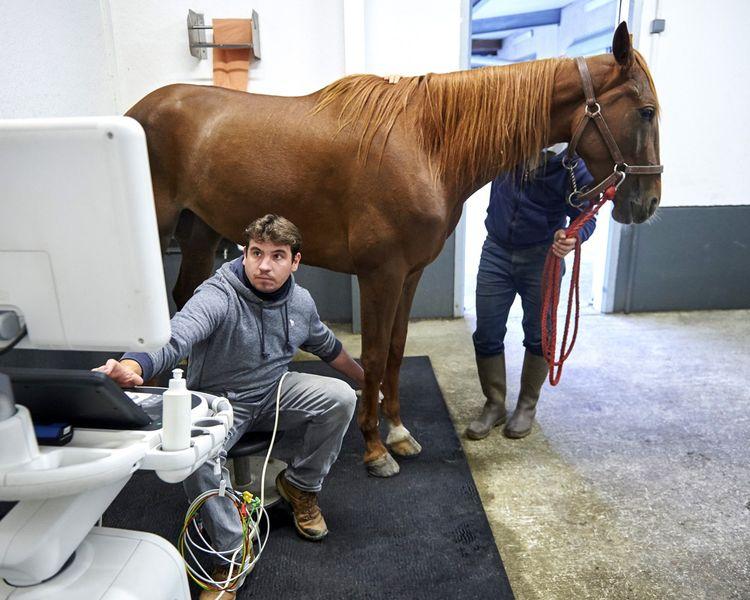 Le vétérinaire Stéphane Cuiller réalise l'échographie d'un tendon.