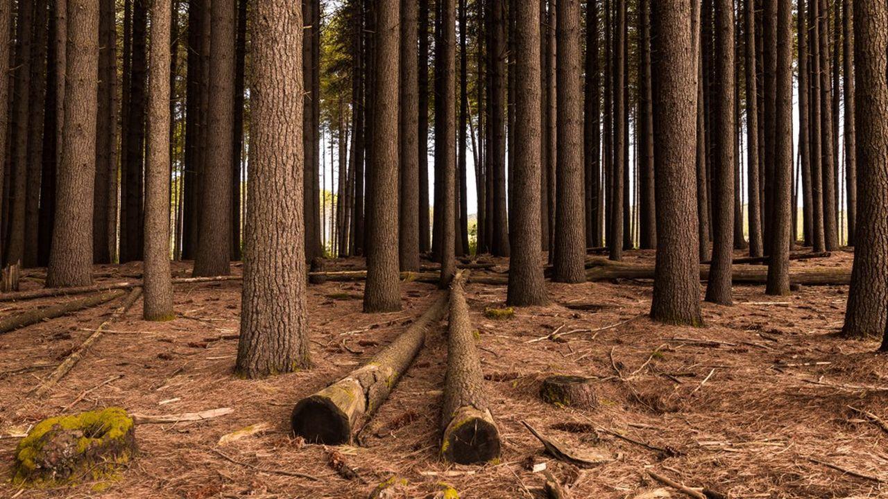 L'entreprise produits ses granulés de bois à partir des déchets forestiers.