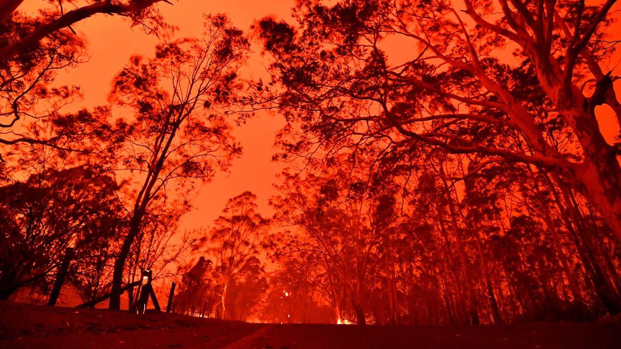 Feux de forêt : 2019, l'année de tous les records