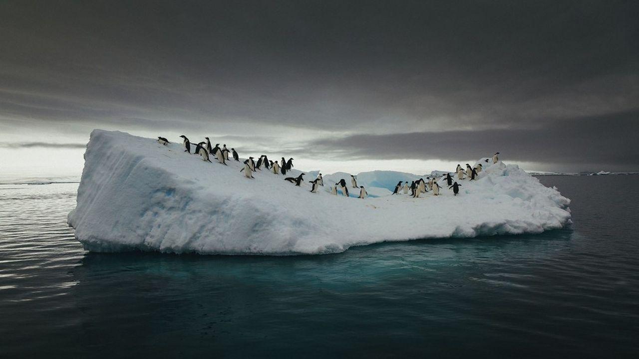 Les auteurs plaident pour un Commissariat scientifique pour le climat.