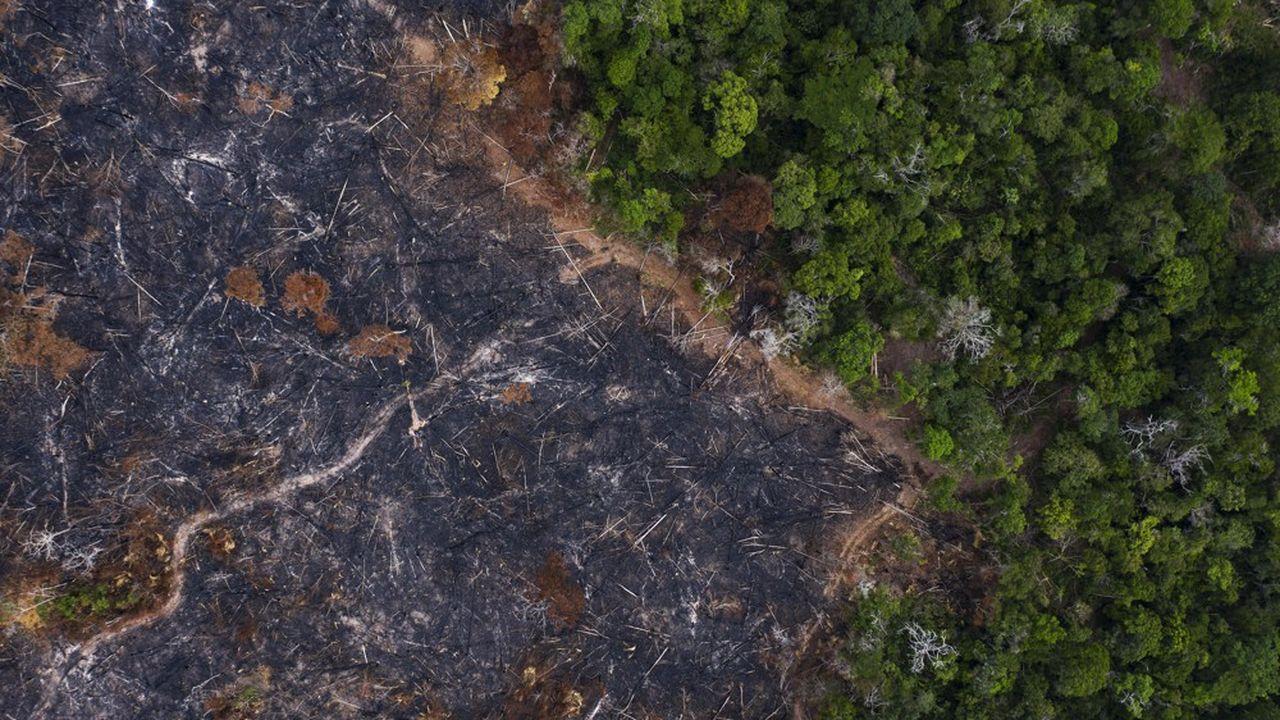 Dans l'Etat de Parà qui concentre 20% des élevages bovins duBrésil, la déforestation s'est envolée de 120%.