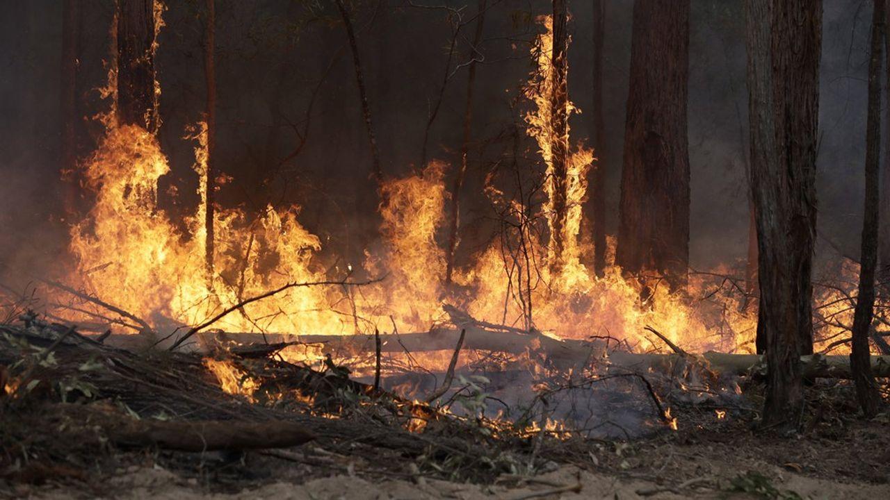 Il reste samedi 75 feux contre 100 quelques jours plus tôt, a indiqué le service rural de lutte contre les incendies de l'Etat de Nouvelle-Galles du Sud