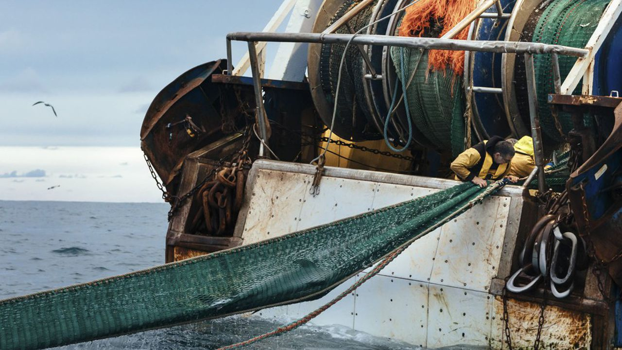 A dolphin caught in the net of L'Arlequin II, in the Bay of Biscay in France, April 4, 2019. A record 1,200 dolphins have washed up on France's Atlantic coast since January. Scientists blame fishing, but fishermen are pushing back. (Andrea Mantovani/The New York Times) *** Local Caption *** EUROPE FRANCE DOLPHINS FISHING BAY OF BISCAY BYCATCH DEATHS CONSERVATION SCIENCE ATLANTIC COAST
