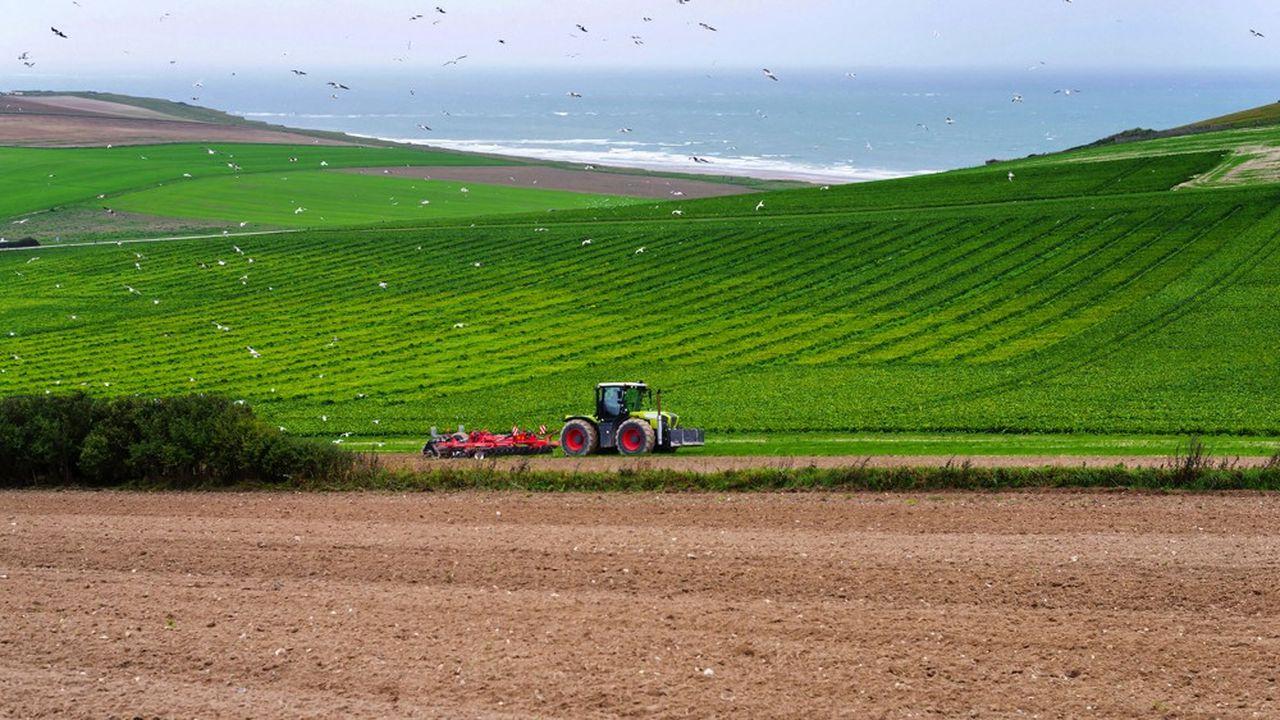 La pollution des sols affecte la sécurité alimentaire parce qu'elle limite les rendements des cultures et diminue la qualité des produits.