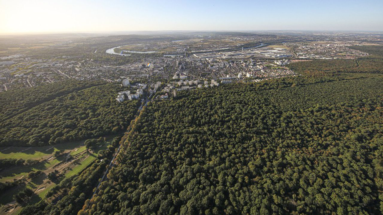 La forêt francilienne est trois fois plus morcelée que dans l'ensemble de l'hexagone, avec des parcelles d'une superficie moyenne d'un hectare.