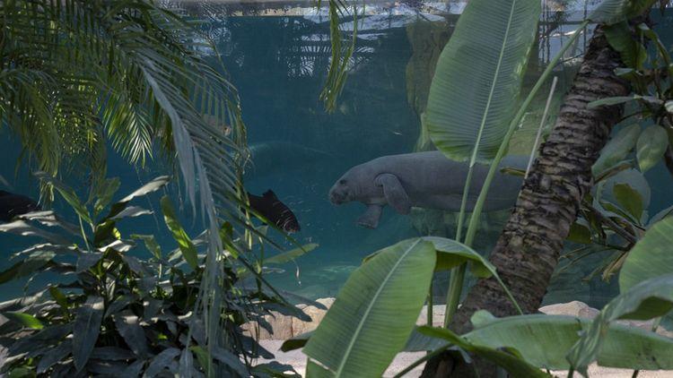 Le prix d'entrée du zoo de Beauval a grimpé de 32 à 34euros pour un adulte.