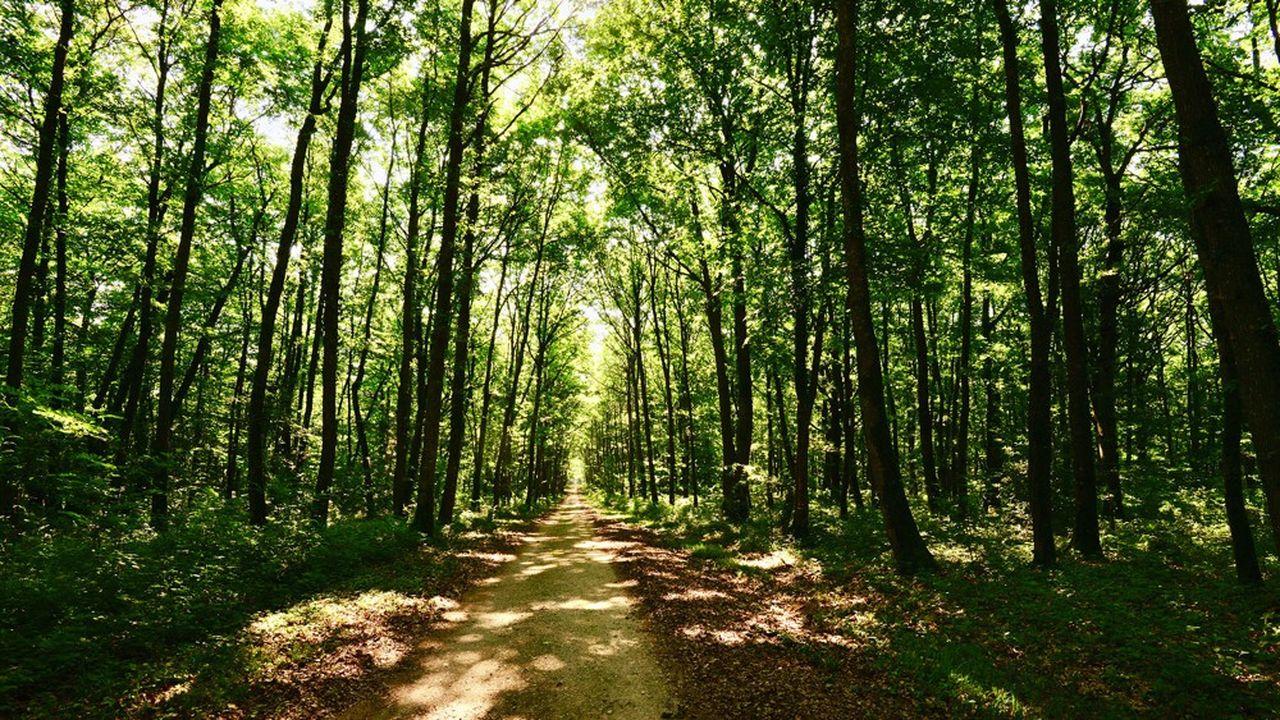 Le rapport propose de laisser un quart de la surface des forêts inexploité.