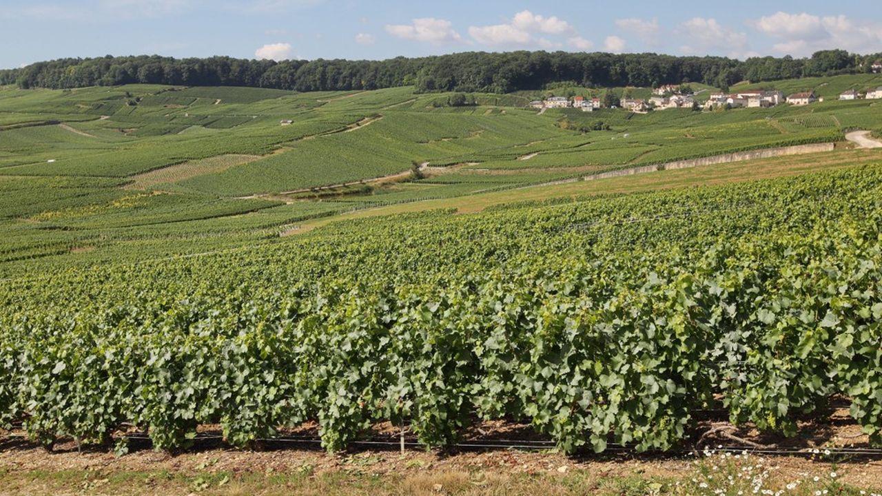 Le vin de Champagne est labellisé bio 10fois moins, en valeur relative, que ceux des Bouches-du-Rhône par exemple.