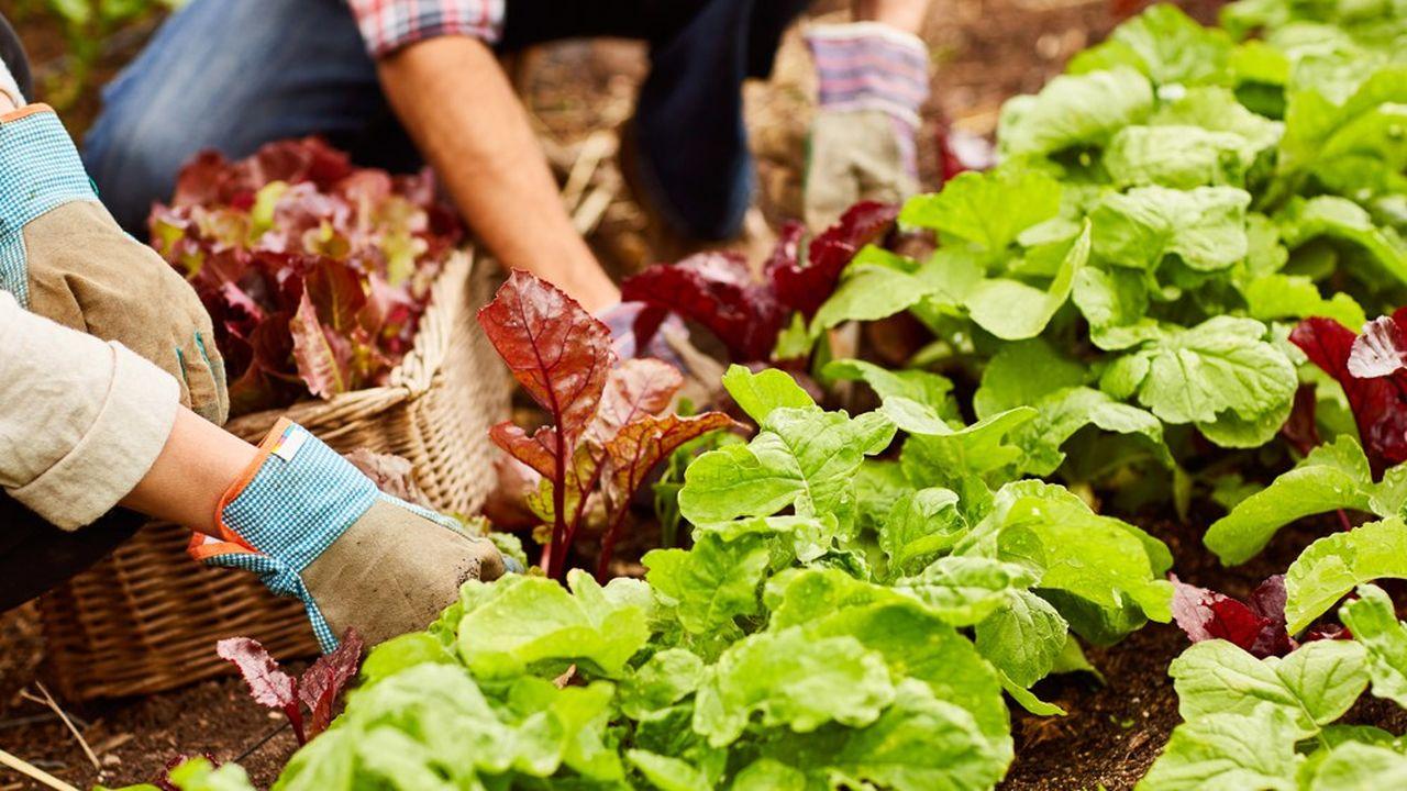 La commune de Ris consacre 13 hectares au développement de l'agriculture.