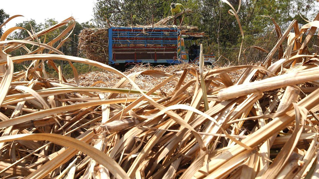 Le marché du sucre en ébullition