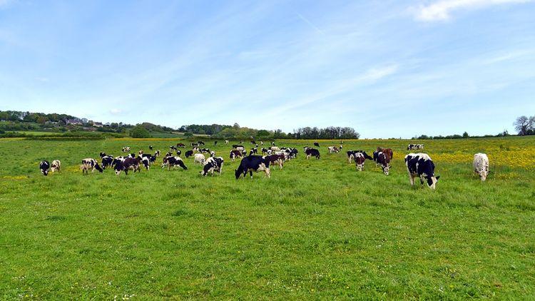 L'élevage représente 10 % des émissions de GES liées à l'activité humaine.