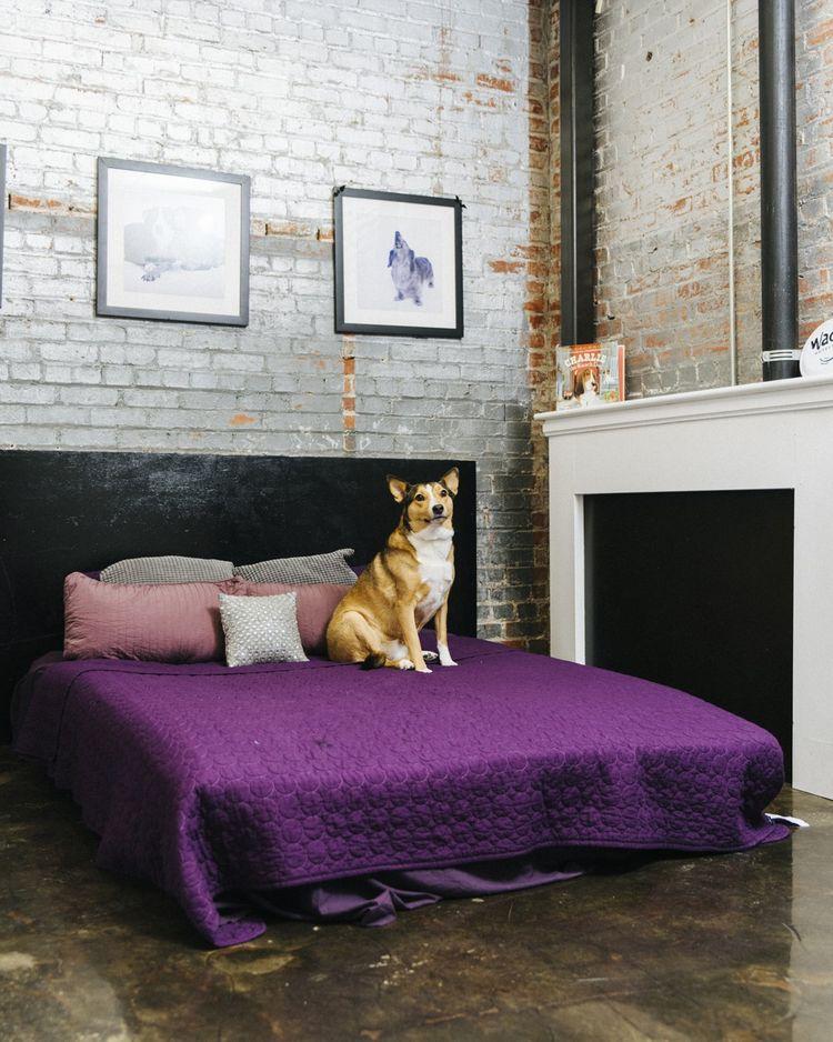 """Appartement avec un lit king-size, un matelas en mousse à mémoire, un écran plat au mur et un biscuit à la camomille avant le coucher ... Dans """"Wag"""" les chiens ont droit à toutes les raisons."""